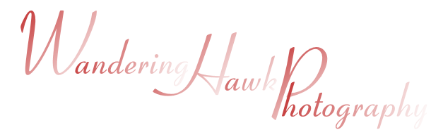 Wandering Hawk Photography