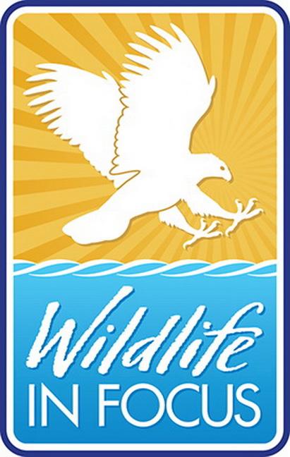 Wildlife in Focus