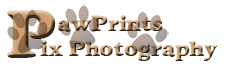 PawPrints Pix Photography