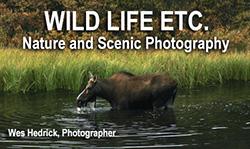 Wild Life Etc.