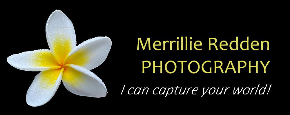 Merrillie Redden Photography