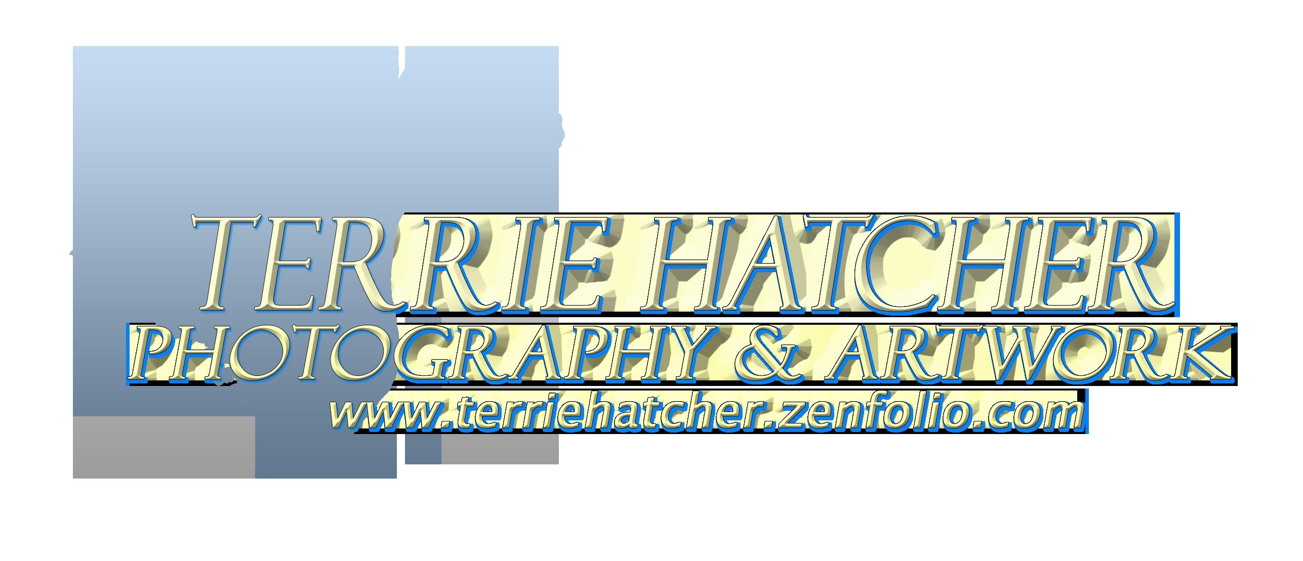 Terrie Hatcher Equine Photography & Artwork