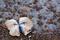 BeachDream Photography