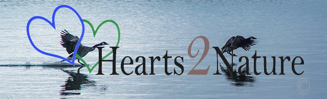 Hearts2Nature.com - North Americas Wildlife and Nature Photography Galleries