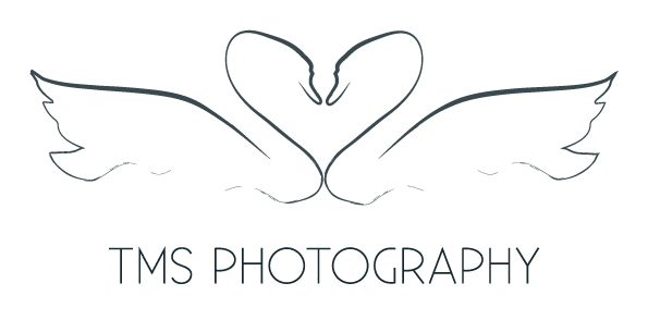 TMS Photography - Derbyshire based Horse and Dog Photographer